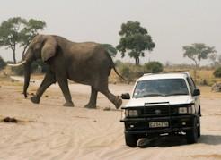 elephant truck small