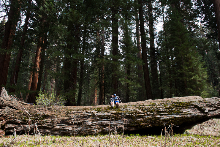 sequoia national park photographers limelife photography california photographers adventure photographers_013